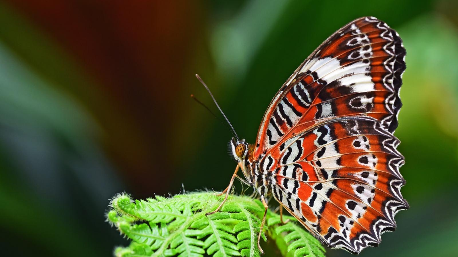 The House of Butterflies, when a passion becomes a museum
